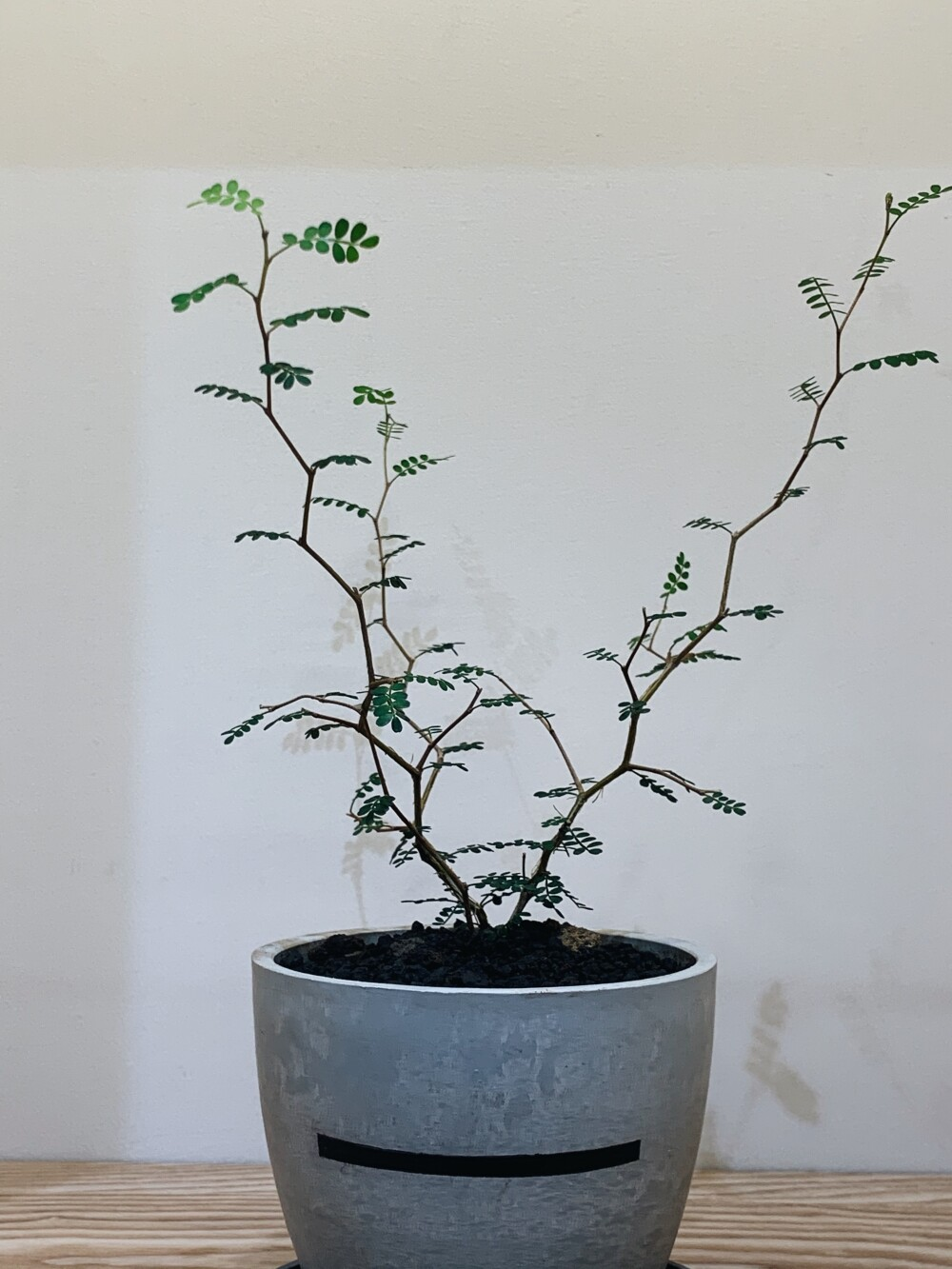 New plants collection -1
