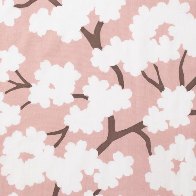桜、咲く、春🌸