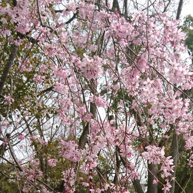 春ですね🌸🌸