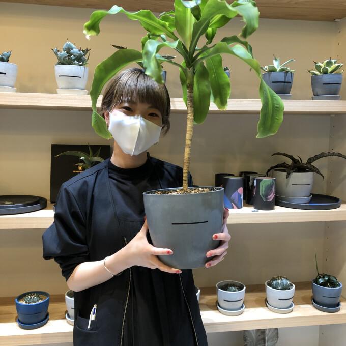 1万円で買える!珍植物!
