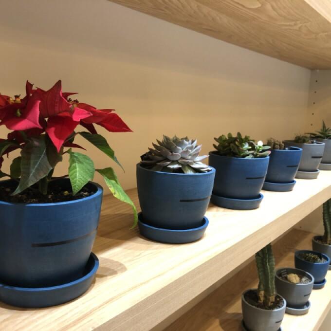 プレゼントにもう一点!3,000円台で選べる植物!