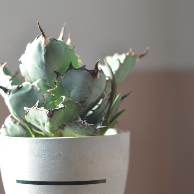 かわいい観葉植物のご紹介です☆