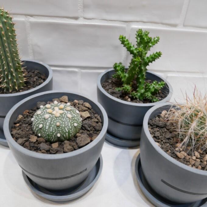 新しくかわいい植物が入荷しました!