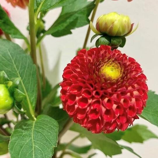 9月 Birthday Flower