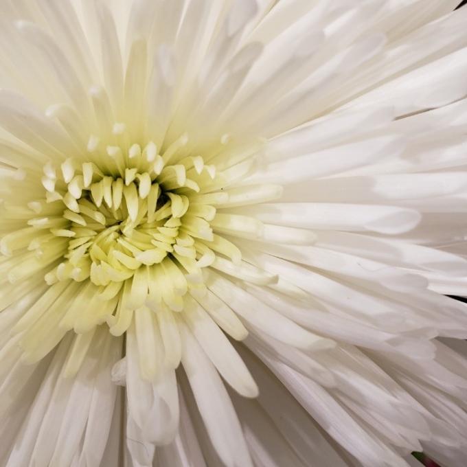 お盆のお花ご案内